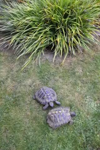 Yogaraum Köln-Sülz, Schildkröten im Garten bringen gutes Feng Shui